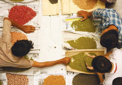 Brokers inspect beans and pulses at the Mahakahtain Taw Association in Mandalay recently. Phyo Wai Kyaw/ The Myanmar Times