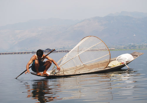 A fisherman nets his catch at Inle Lake in March 2008. (Douglas Long / The Myanmar Times)