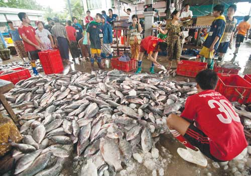 Saltwater fish prices have declined by a quarter in the past three months as a result of falling Chinese demand. (Boothee/The Myanmar Times)