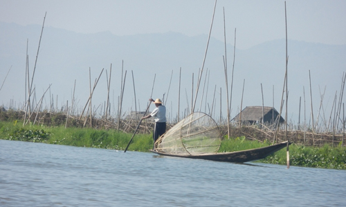 A fisherman wades through a plantation on Inle Lake January 4, 2013. (Khin Su Wai/The Myanmar Times)