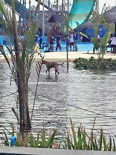 A stray dog splashes around on Water Boom's opening day of March 2. It closed early due to complaints and malfunctions. Photo: Facebook / Echo Today