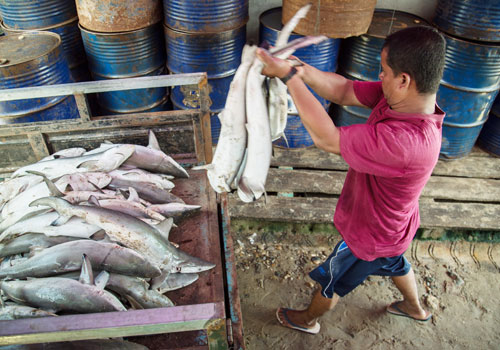 A fisherman loads his daily catch onto the back of a cart. Officials say that fish products have the potential to help boost trade to South Korea. Photo: Aung Myin Ye Zaw / The Myanmar Times