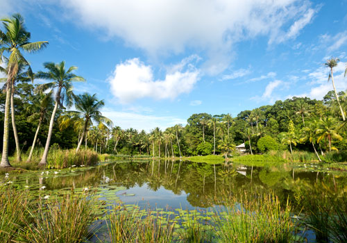 Pulau Ubin, an island that lies off Singapore's northeast coast, provides an easy, inexpensive escape from the commotion of the rest of the country. Photo: Shutterstock