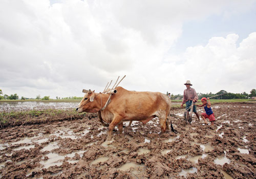 A farmer ploughing a rice filed. Water security is critcal for the agriculture sector which remains a pillar of Myanmar's economy. Photo - AFP