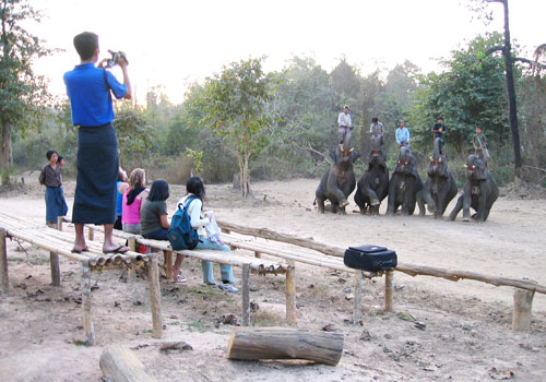 The travel sector welcomes the move to turn elephant camps into tourist attractions, saying it would provide a new experience for travellers and give job opportunities for mahouts. Photo - Staff