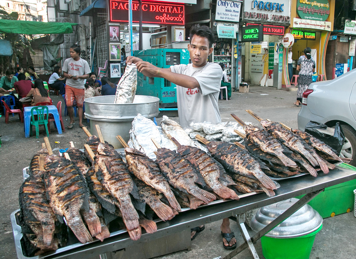 Grilled fish tainted with bacteria study the myanmar times for Diarrhea after eating fish
