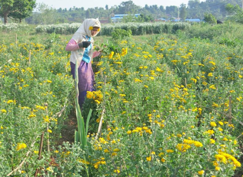 A woman tends her flower fields on the disputed land, with the factory in the