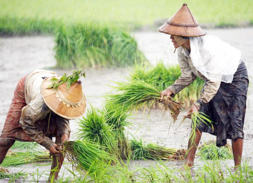 Border Rice Trade To Survive Bilateral Move To Legalise