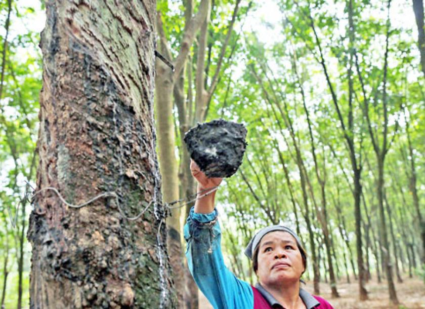 Rubber price spike starts to erase losses | The Myanmar Times