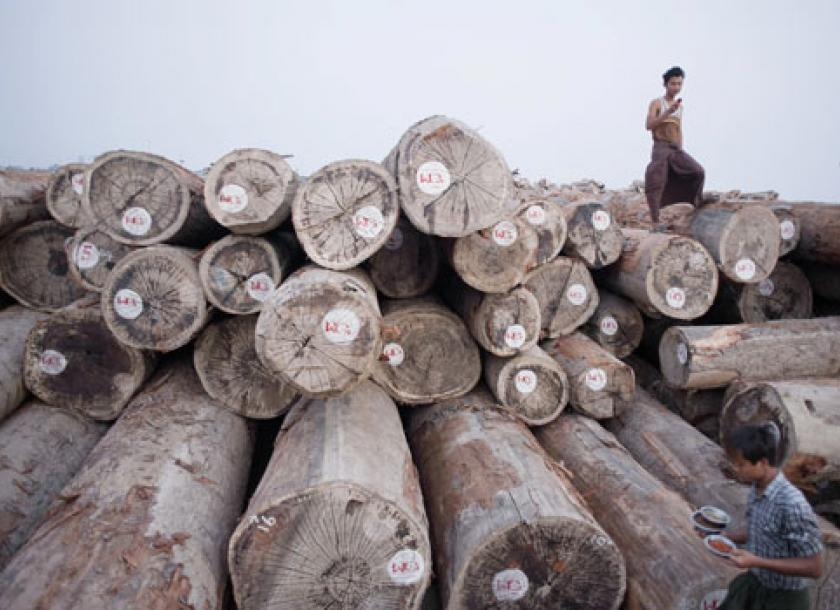 Report lays bare forestry sector's ills | The Myanmar Times