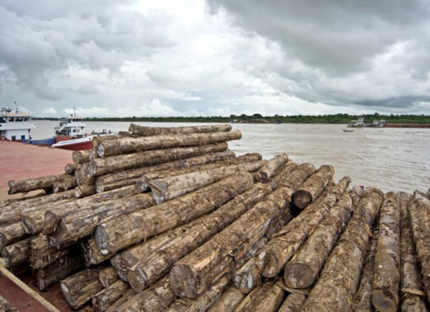 Myanmar turns to timber exports to save forests   The