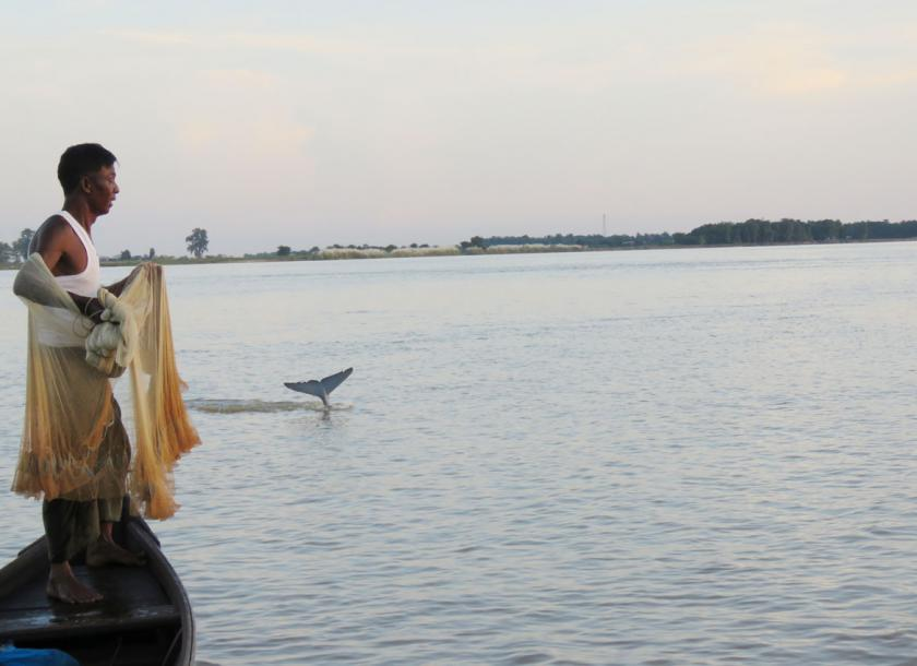 U Maung Lay responds to the signal Ayeyarwady dolphin gives. Photo - WCS (Myanmar)