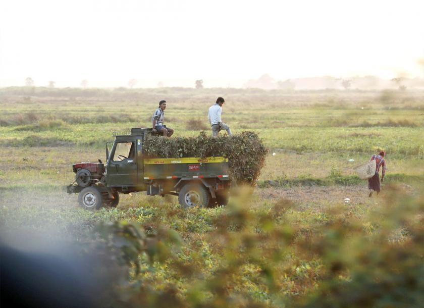 A file photo of farmers harvesting crops in Myanmar. Myanmar Agricultural Development Bank announced on April 1 it is cutting interest rates for its loans. Photo - EPA