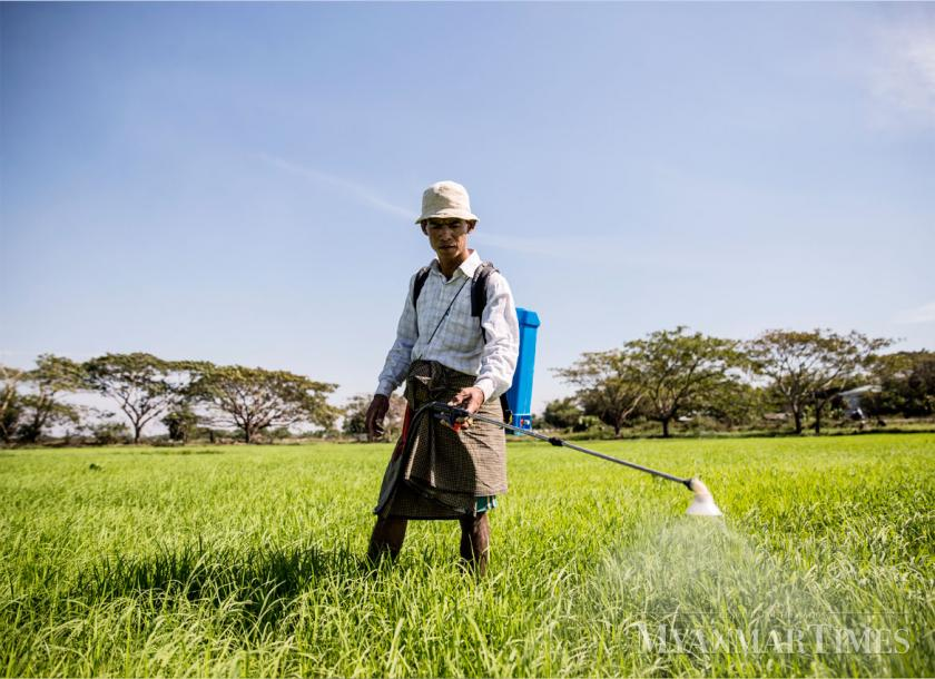 Myanmar ups efforts to stem fall in rice exports | The