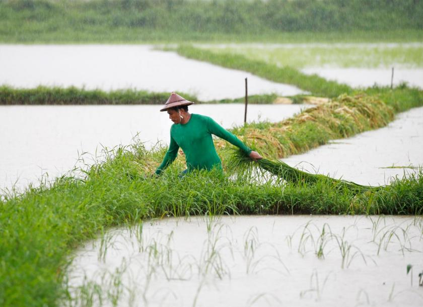 A farmer working in a rice field in Mon State. The state government is inviting investors for six sectors including agriculture. Photo - EPA