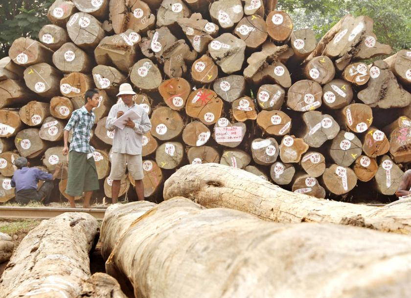 Timber Auctions Temporarily Suspended As Illegal Trading