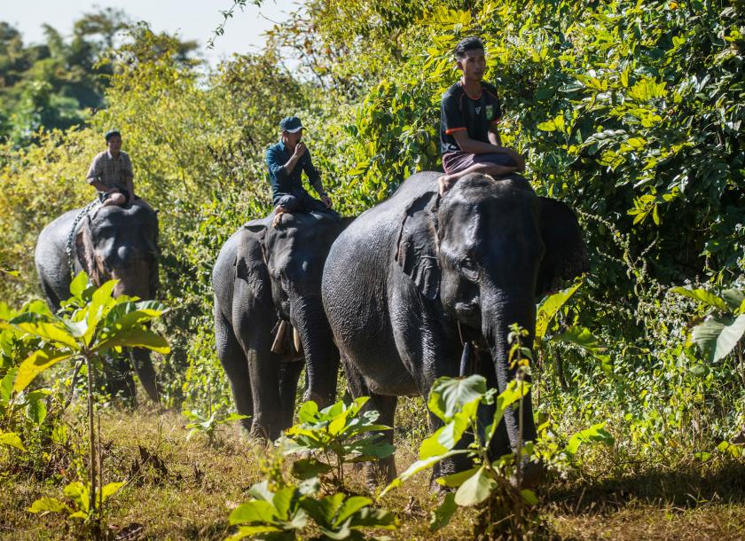 Elephants and their mahouts at the Myaing Hay Wun Elephant Camp near Taikyi township on December 27, 2020.