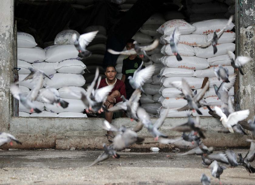 Pigeons fly by a rice warehouse in Yangon. Photo: EPA
