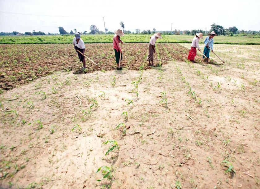 People work in a field as they prepare to cultivate maize near Naypyitaw. Photo - EPA