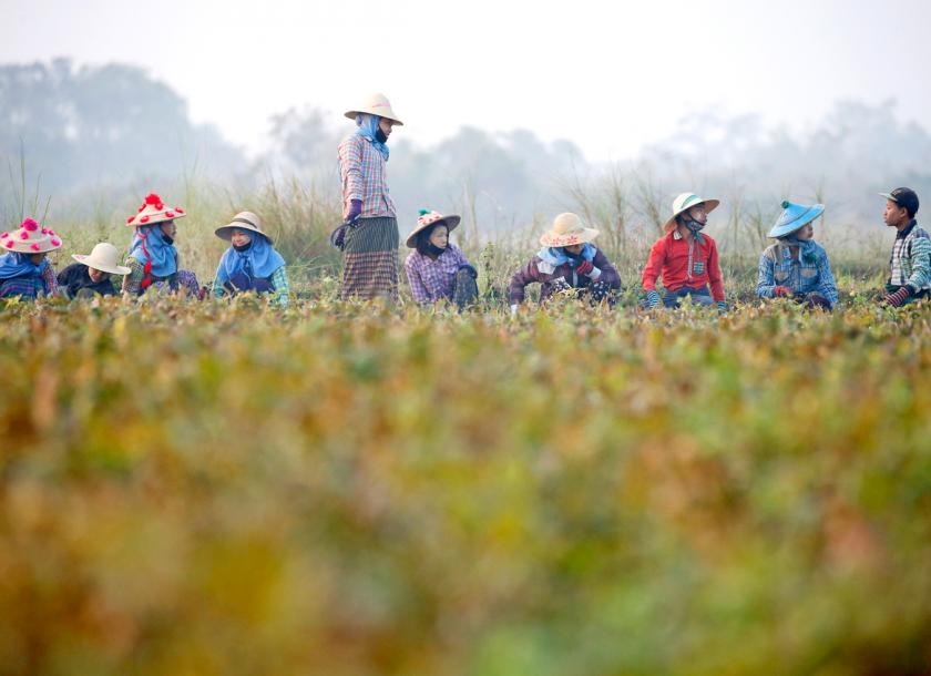 Myanmar, India continue pulse and bean price negotiations | The