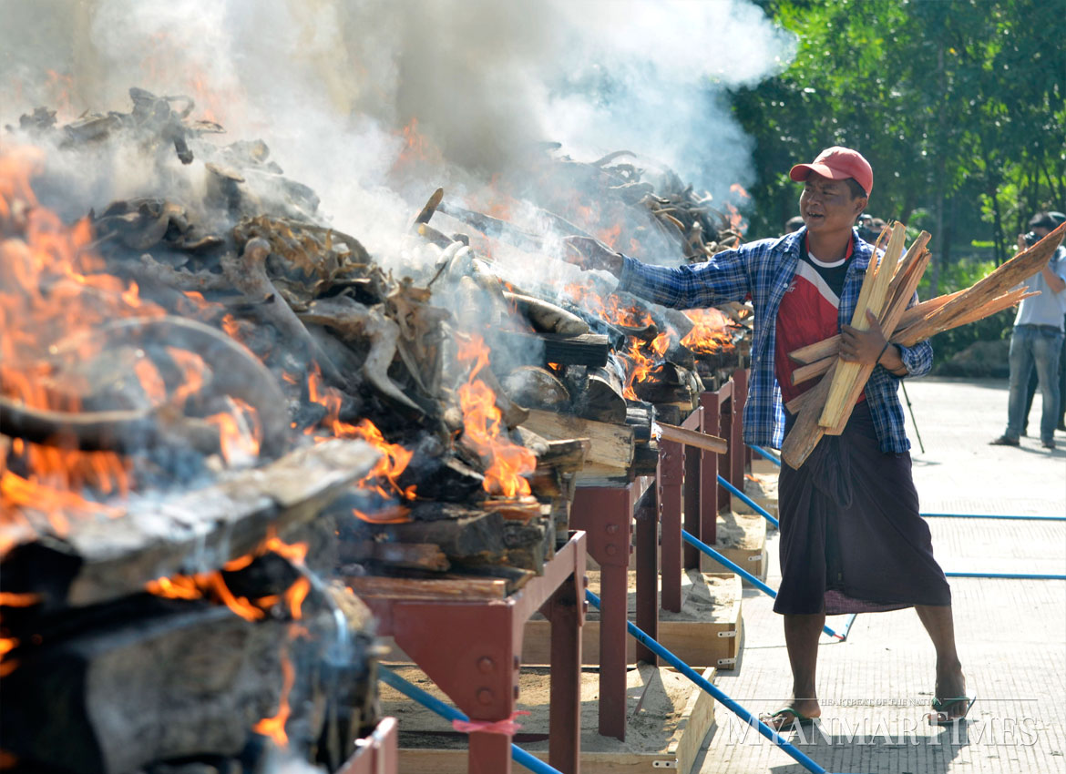 A man adds fuel to the burning ivory and wildlife parts in Nay Pyi Taw. Pyae Thet Phyo/The Myanmar Times